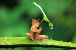 frog-under-umbrella